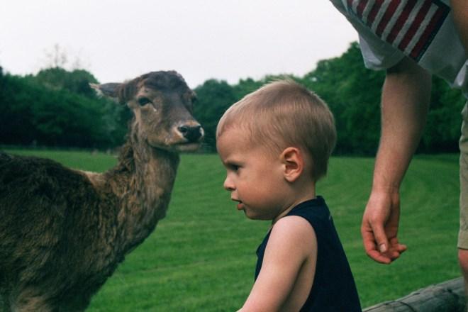 finn&llama